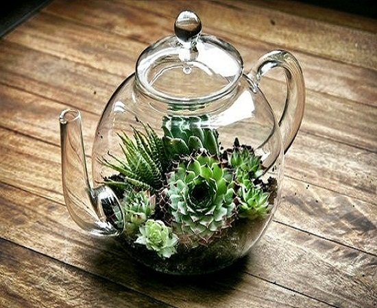 12 terrarium ideas for home decor ultimate home ideas. Black Bedroom Furniture Sets. Home Design Ideas