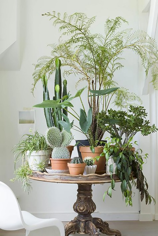 33 creative ways to include indoor plants in your home Beautiful plants for home