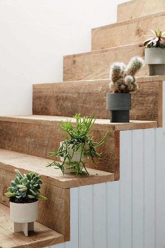 Indoor House Plants