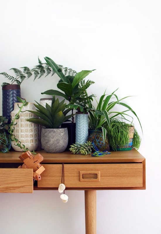 Indoor House Plants