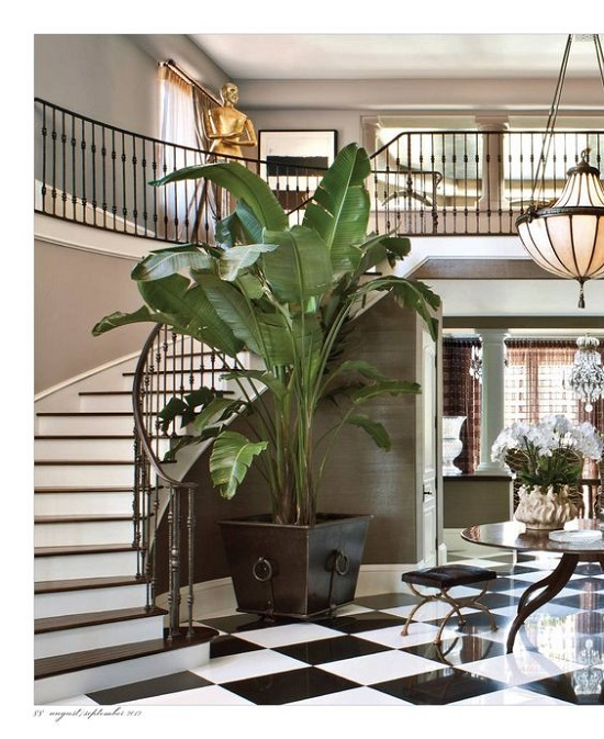 Creative Ways To Include Indoor Plants In Your Home - Big indoor plants