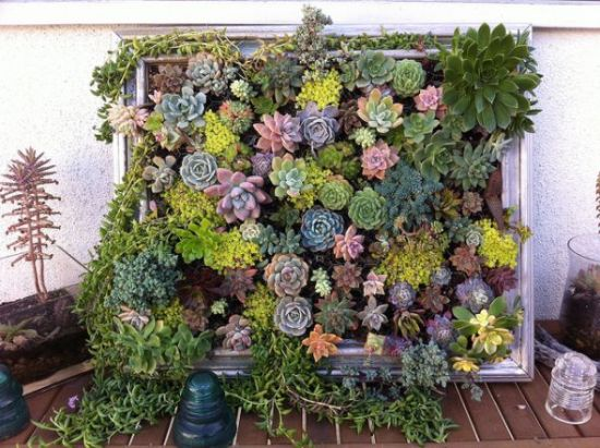 diy hanging succulent garden idea