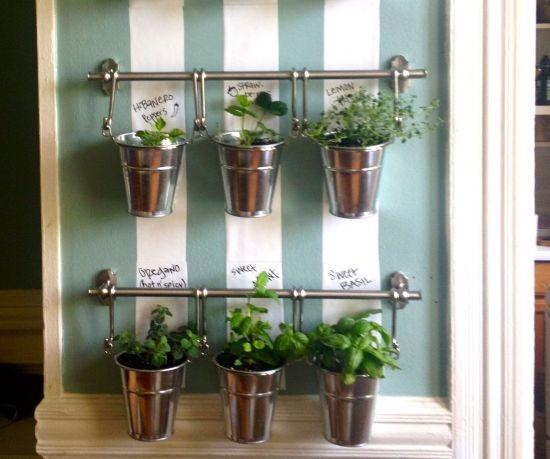 Grow Herbs Indoor