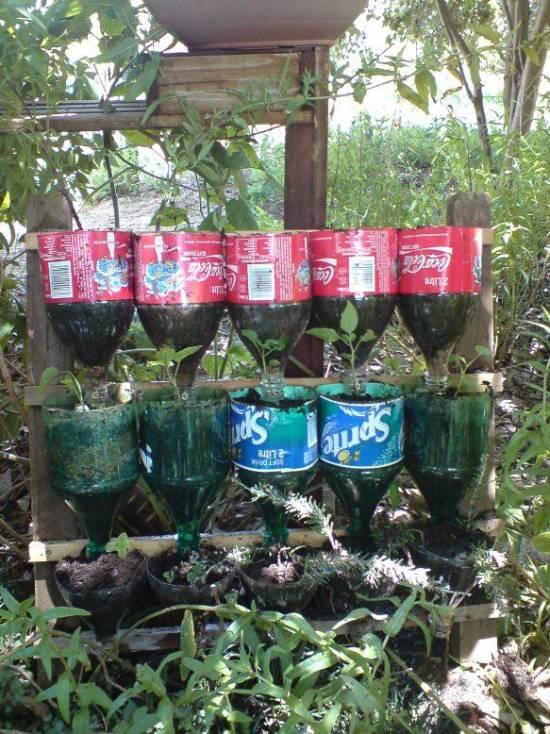 DIY Bottle Herb Garden