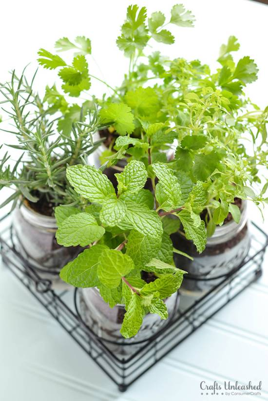 DIY Herb Garden In Mason Jars