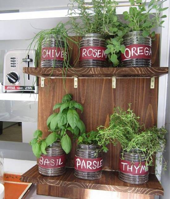 Indoor Garden With Fresh Herbs