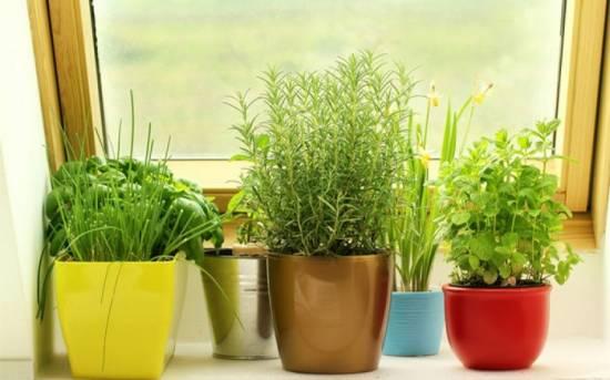 Indoor Windowsill Herb Garden