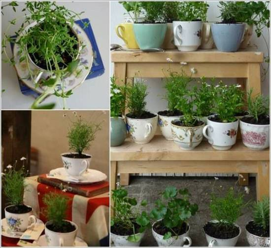Attractive Tea Cup Herb Garden