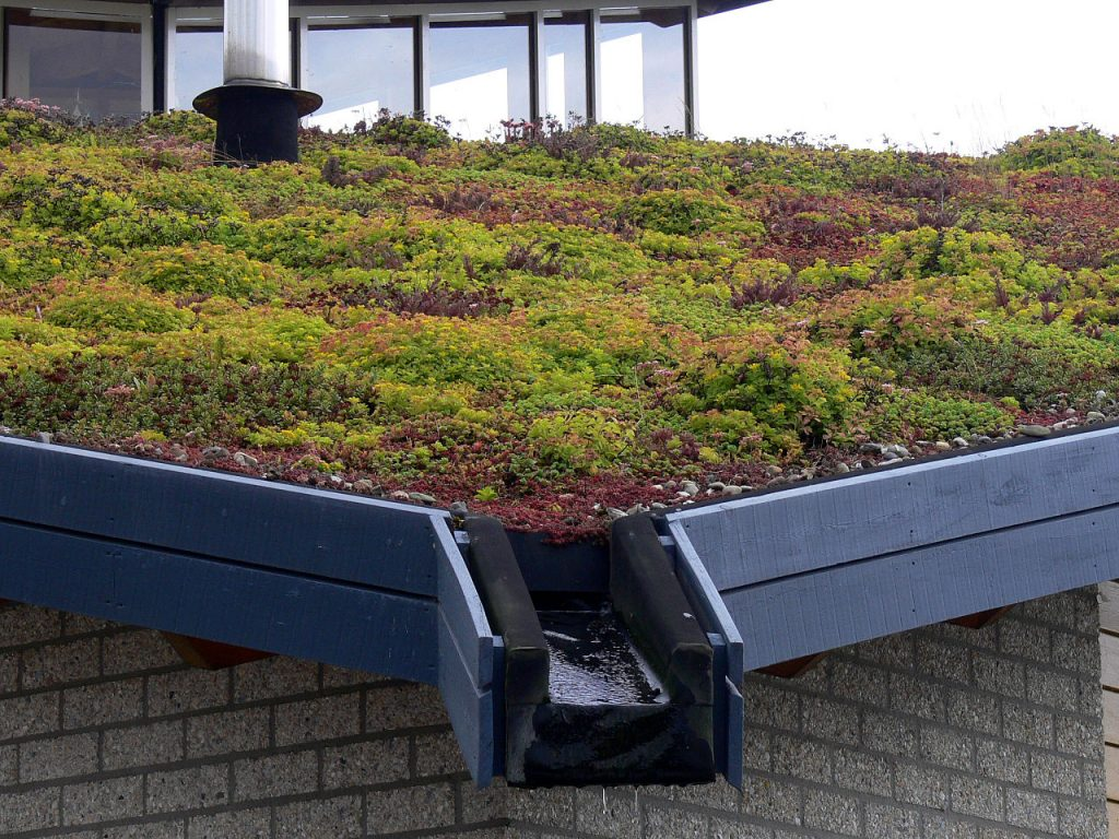 Small Scale Green Roofs Ultimate Home Ideas